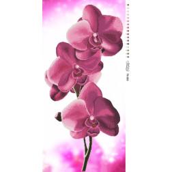 Набір для вишивки бісером Барвиста Вишиванка Орхідеї 46х95 ТК003пн4695k