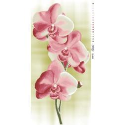 Схема для вишивки бісером Барвиста Вишиванка Ніжні Орхідеї 46х95 ТК005пн4695
