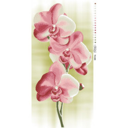 Набір для вишивки бісером Барвиста Вишиванка Ніжні Орхідеї 46х95 ТК005пн4695k